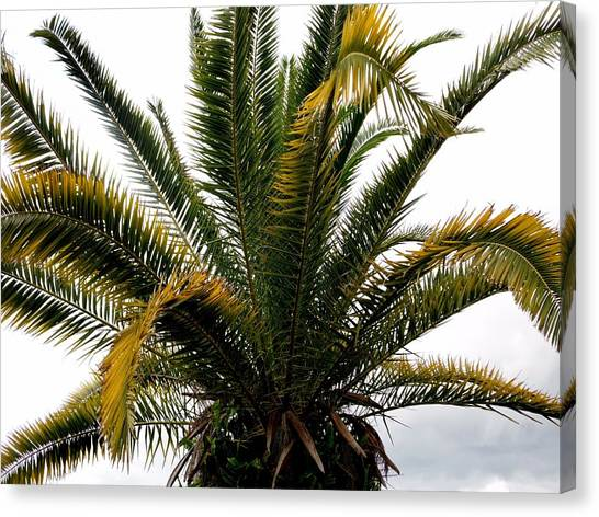 Sideshow Palm Canvas Print