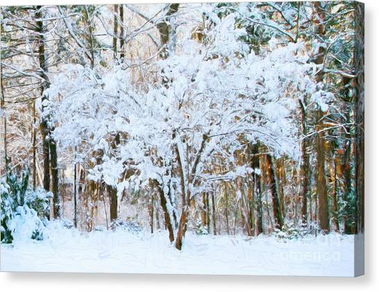 Siebold Viburnum In Snow Canvas Print