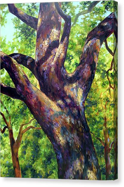 Sun Belt Canvas Print - Sierra Oak by Jill Pankey