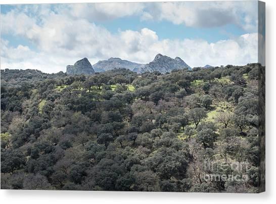 Sierra Ronda, Andalucia Spain Canvas Print