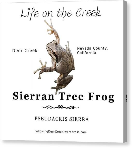 Sierran Tree Frog - Photo Frog, Black Text Canvas Print
