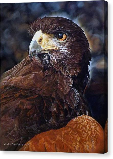 Sig The Harris Hawk Canvas Print