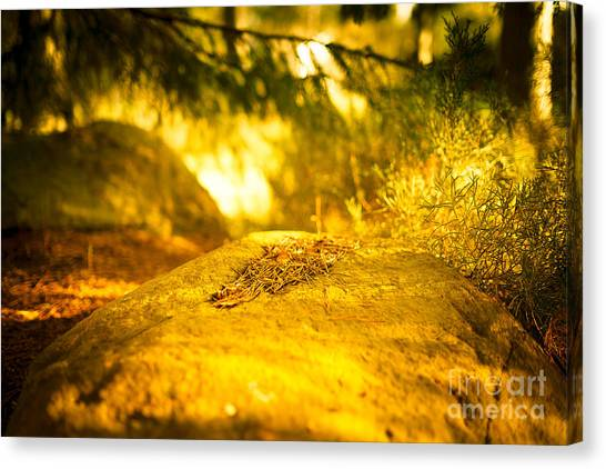 Silence And Peace Under The Spruce Trees Canvas Print