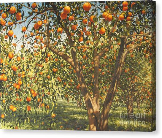 Orange Tree Canvas Print - Silence Under The Oranges I, 2012 by Angus Hampel