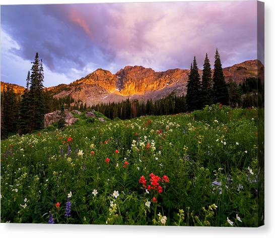 Silent Stirrings Canvas Print