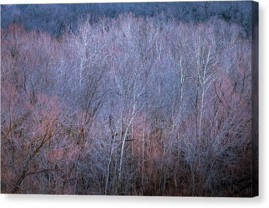 Silent Trees Canvas Print