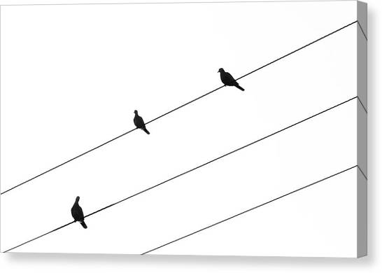 Silhouette Of Birds Sitting On Electric Cables Canvas Print