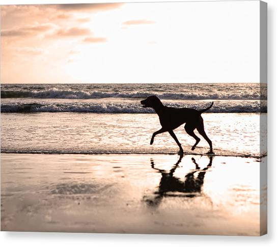 Silhouette Of Dog On Beach At Sunset Canvas Print