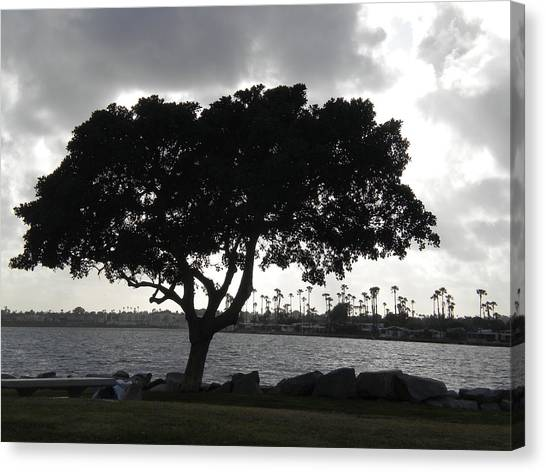 Silhouette Of Tree Canvas Print