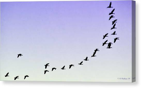 Silhouetted Flight Canvas Print