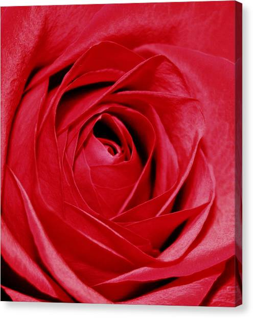 Silky Petals Canvas Print by Cathie Tyler