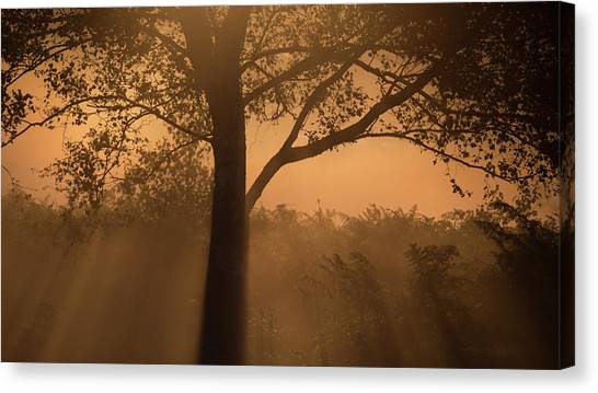 Sherwood Forest Canvas Print - Sillhouette by Chris Dale
