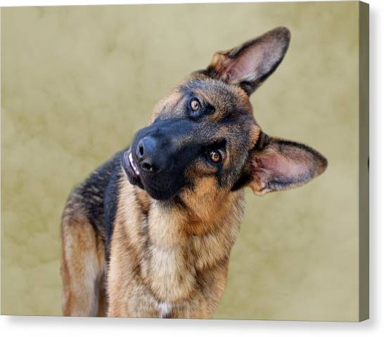 German Shepherds Canvas Print - Silly Boy by Sandy Keeton