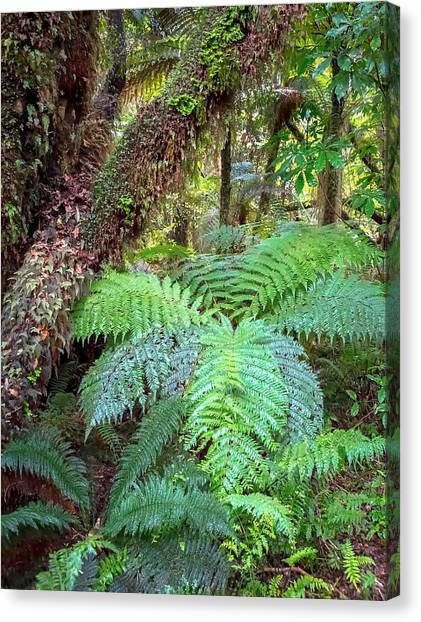 Fox Glacier Canvas Print - Silver Fern Forest by Cindi Alvarado