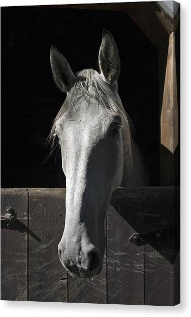 Horse Farms Canvas Print - Silver by Jack Goldberg
