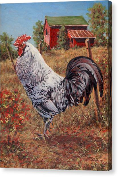 Silver Laced Rock Rooster Canvas Print