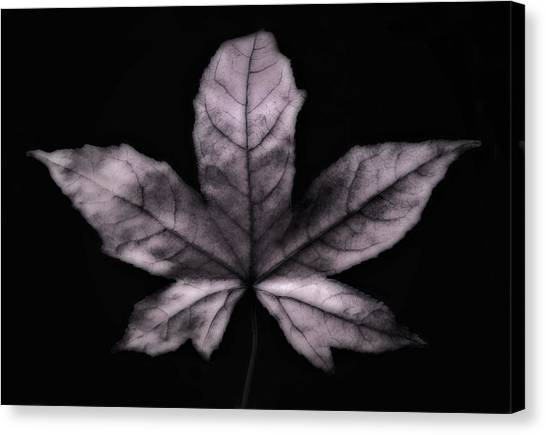 Silver Leaf Canvas Print by Artecco Fine Art Photography