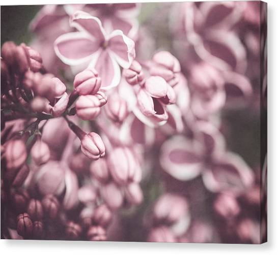 Silver Lilacs Canvas Print by Lisa Russo