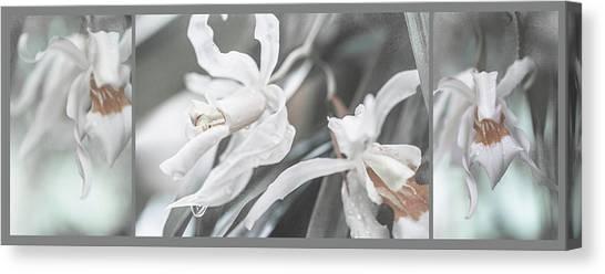 Silver Melody. Triptych Canvas Print