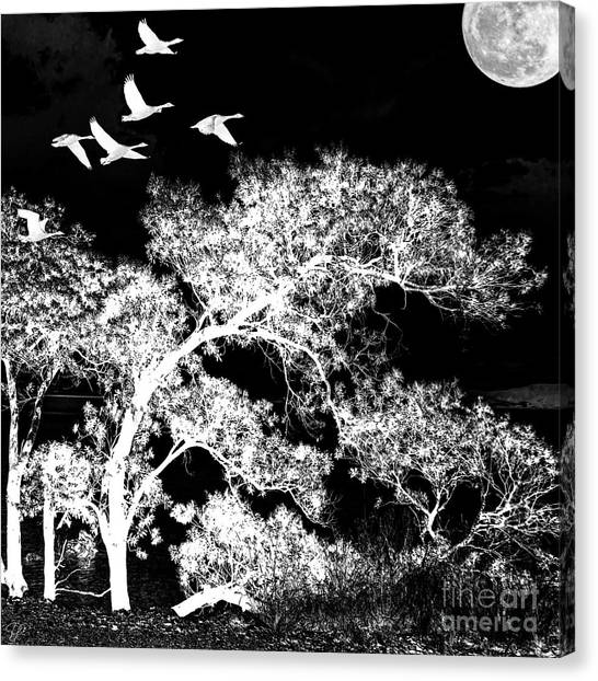 Silver Nights Canvas Print