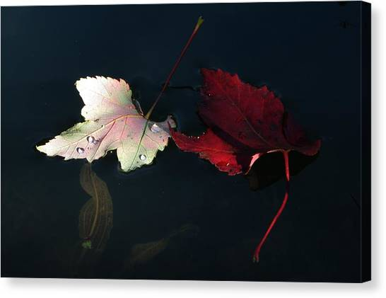 Silver Red And Black Canvas Print