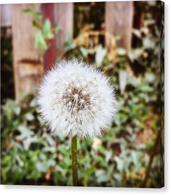 Social Canvas Print - Simple Fragile Beauty..take Time To by Scott Pellegrin