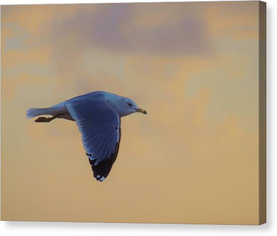 Simply Flying Canvas Print