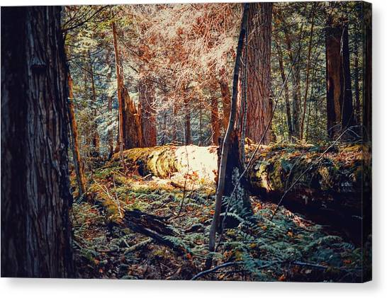 Mossy Forest Canvas Print - Simply Forest  by Shelley Smith