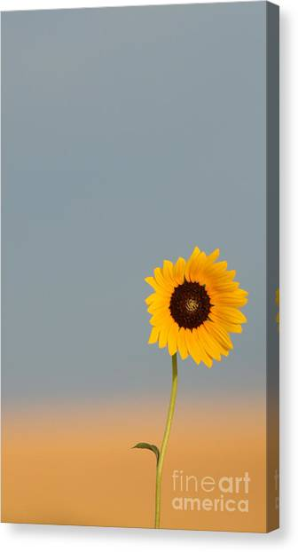 Simply Kansas Canvas Print