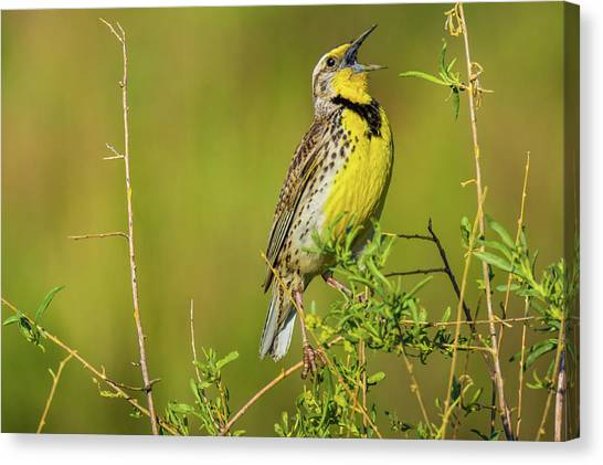 Canvas Print featuring the photograph Sing A New Song by John De Bord