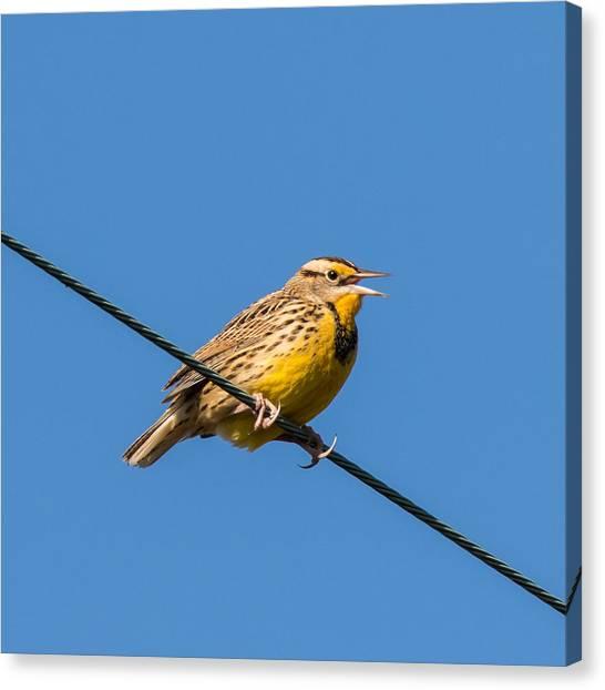 Meadowlarks Canvas Print - Singing On The Wire by Jurgen Lorenzen
