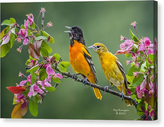 Canvas Print - Singing To The Mrs. by Peg Runyan