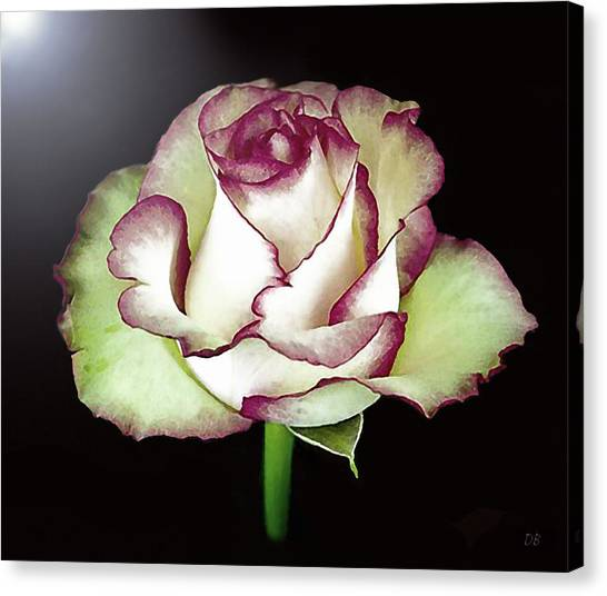 Single Beautiful Rose Canvas Print