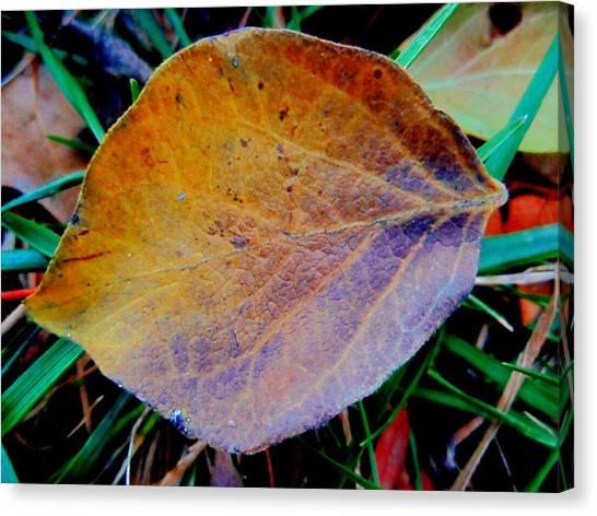 Single Brown Leaf Canvas Print by Beth Akerman