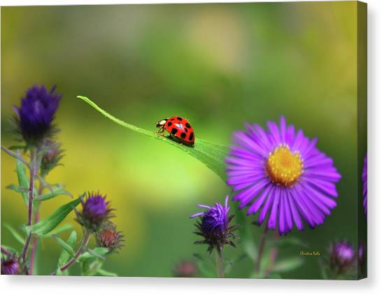 Ladybugs Canvas Print - Single In Search by Christina Rollo