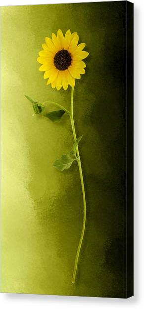 Canvas Print featuring the photograph Single Long Stem Sunflower by Debi Dalio