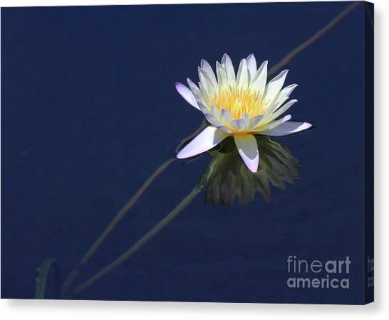 Single Lotus Canvas Print