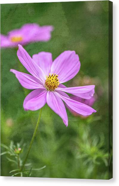 Single Perfection Canvas Print