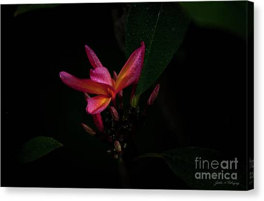 Single Red Plumeria Bloom Canvas Print