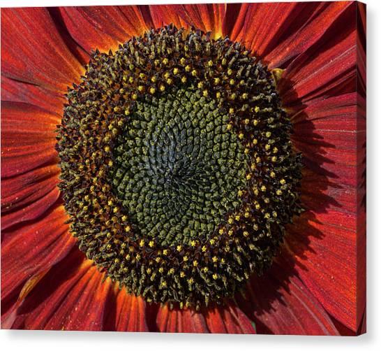 Single Sun Flower Canvas Print