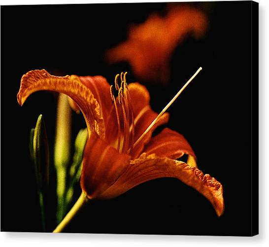 Single Tiger Lily Canvas Print by Roger Soule