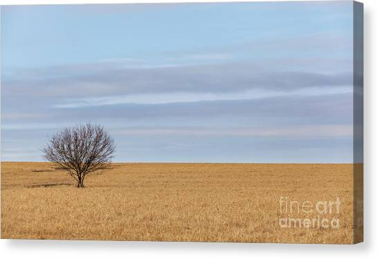 Single Tree In Large Field With Cloudy Skies Canvas Print
