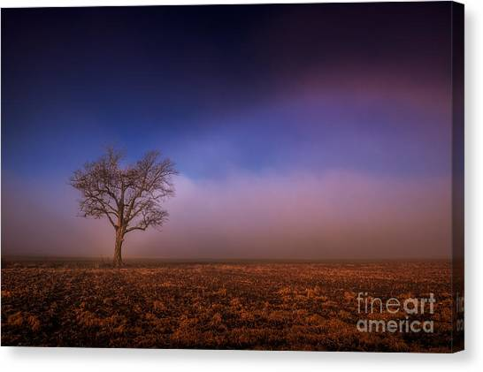 Single Tree In The Mississippi Delta Canvas Print
