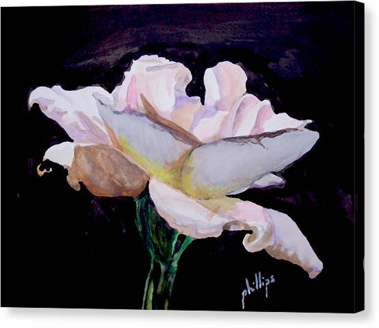 Single White Rose Canvas Print by Jim Phillips