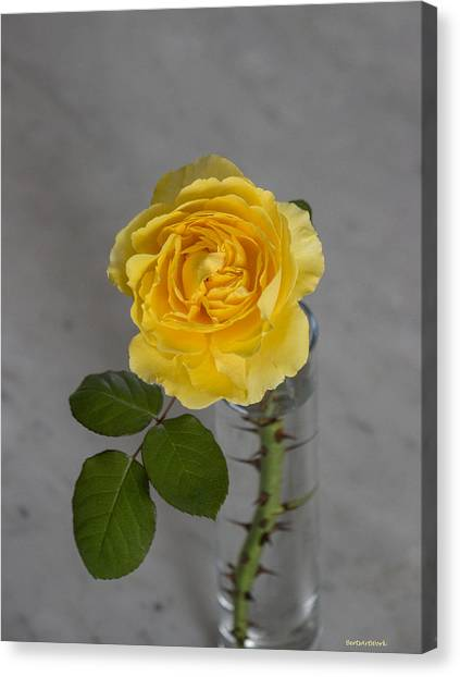 Single Yellow Rose With Thorns Canvas Print