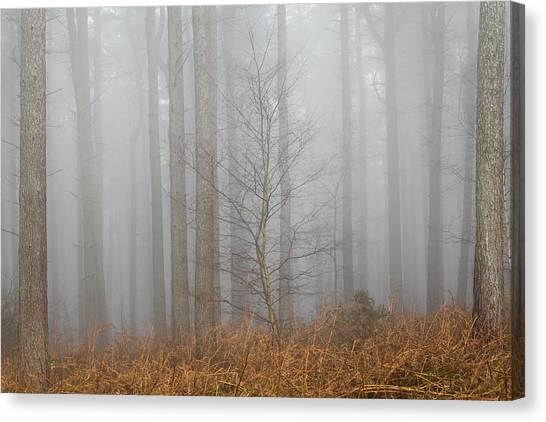 Early Spring Canvas Print - Singled Out by Chris Dale