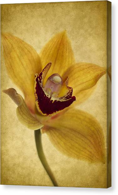 Orchid Canvas Print - Singular Sensation by Rebecca Cozart