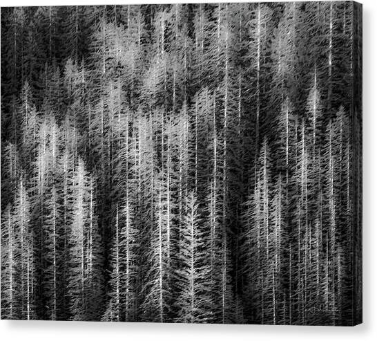 Sitka Abstraction Canvas Print