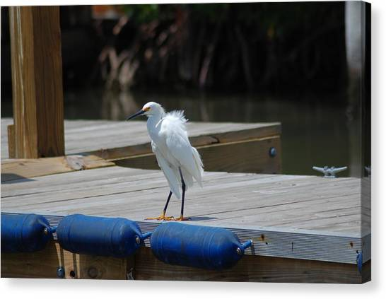 Sitting On The Dock Of The Bay Canvas Print by Clay Peters Photography