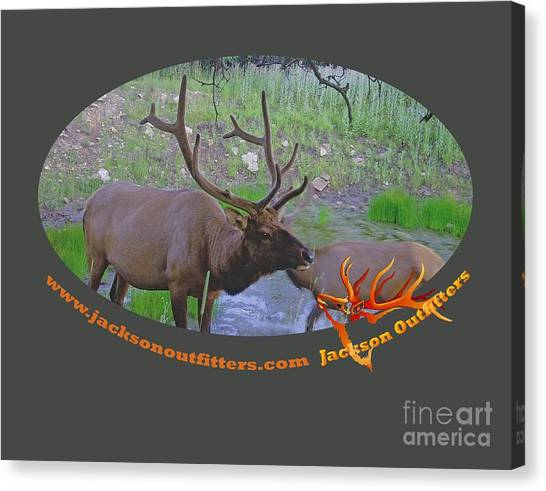 Six Point Bull Elk In Colorado Canvas Print